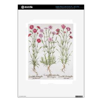 Diversas variedades de clavel, del 'Hortus Ey Pegatinas Skins Para iPad 3
