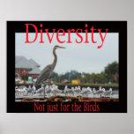 Diversidad, no apenas para los pájaros poster