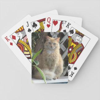 Diversión del verano de la belleza barajas de cartas