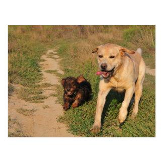 Diversión Labrador de Sprint y postal de Dachhund