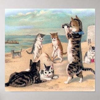 Diversión linda del gato en la playa póster