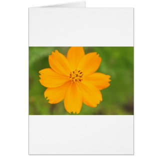 Diversos Flor amarela Card