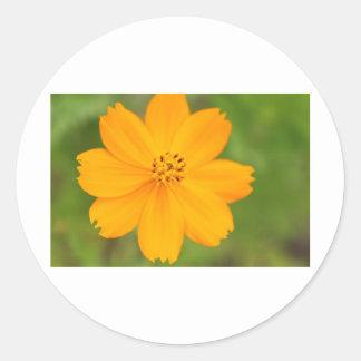 Diversos Flor amarela Classic Round Sticker