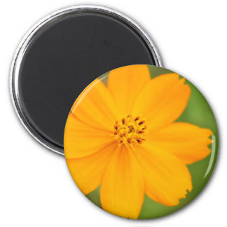 Diversos Flor amarela Magnet