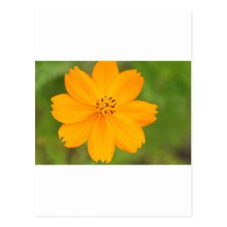 Diversos Flor amarela Postcard