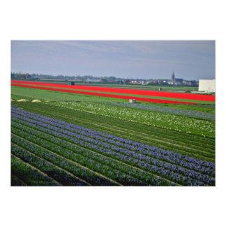 Diversos remiendos de las flores flores holandesa anuncio