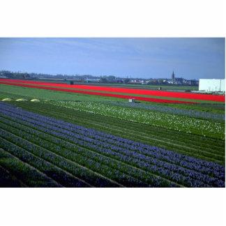 Diversos remiendos de las flores, Países Bajos Fotoescultura Vertical
