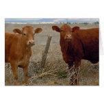 Divertido consiga el pozo - vaca roja el humor ani felicitacion
