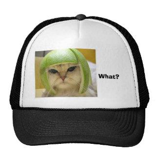 ¿divertido-gato, qué? gorras