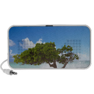 Divi Divi Tree Eagle Beach Aruba Caribbean Mini Speakers