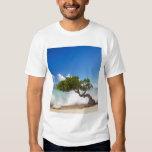Divi Divi Tree, Eagle Beach, Aruba, Caribbean T Shirts