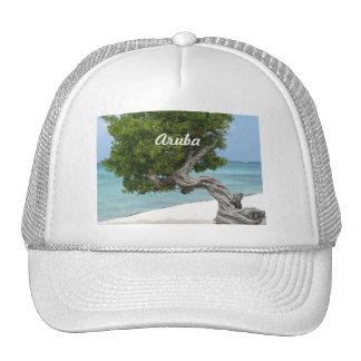 Divi Divi Tree in Aruba Hats