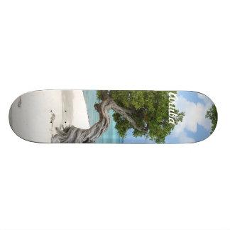 Divi Divi Tree in Aruba Skateboard
