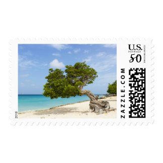 Divi Divi Tree on the Caribbean Island of Aruba Postage