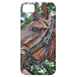 Divine Luck - Phipps Stables iPhone 5 Cover
