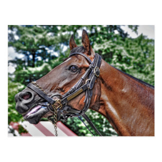 Divine Luck - Phipps Stables Postcard