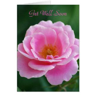 Divine pink rose card