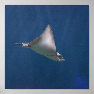 Diving Stingray Poster