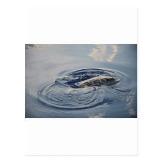 Diving Turtle Postcard