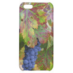 Divinity iPhone 5C Covers