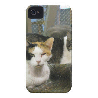 Dixie and Cats iPhone 4 Cover