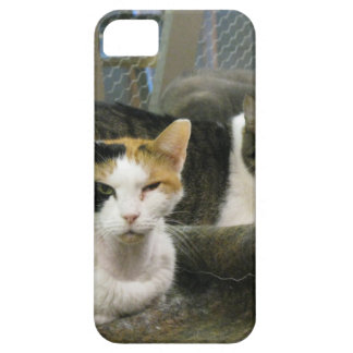 Dixie and Cats iPhone SE/5/5s Case