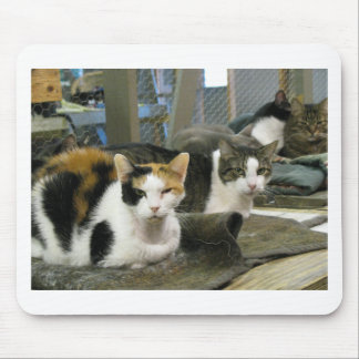Dixie and Cats Mouse Pad