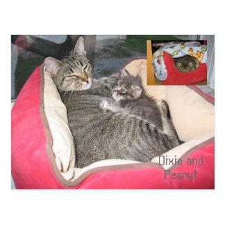 Dixie & Peanut in Peanut's bed Postcard