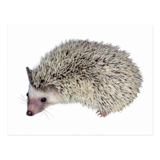 DIY Hedgehog left Post Cards