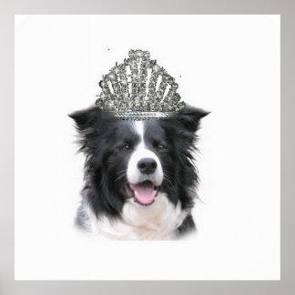 Dizzy Dogz~Border Collie Poster~Halloween Poster