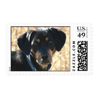 Dizzy Postage Stamp