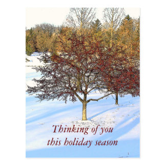 """DK.RED TREE IN SNOW, """"THINKING OF YOU THIS HOLIDAY POSTCARD"""