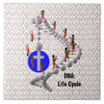 DNA: Ciclo vital Azulejos Ceramicos