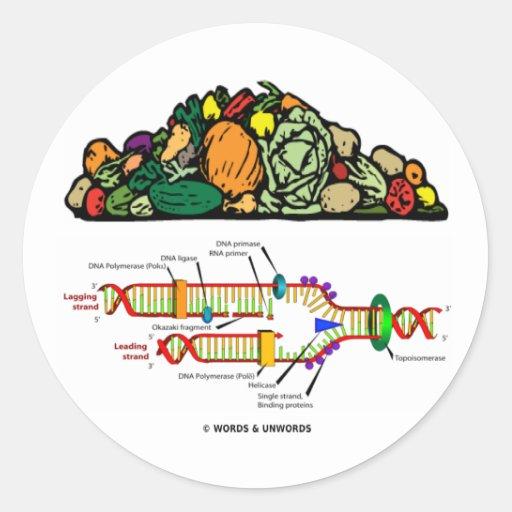 DNA del vegetariano (pila de vegetariano de las Etiqueta Redonda