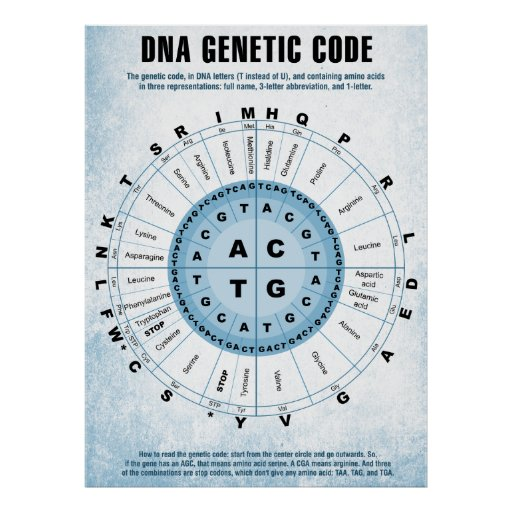 DNA Genetic Code Chart Poster | Zazzle Z Table Chart