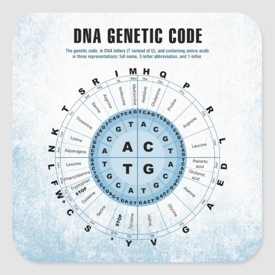 DNA Genetic Code Chart Square Sticker