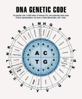 DNA Genetic Code Chart Tshirts