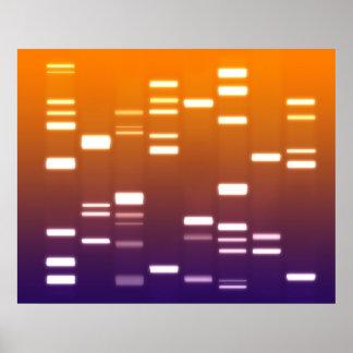 DNA Genetic Code Orange Blue Poster