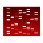 DNA Genetic Code Red Post Cards