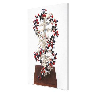 DNA Model Canvas Print