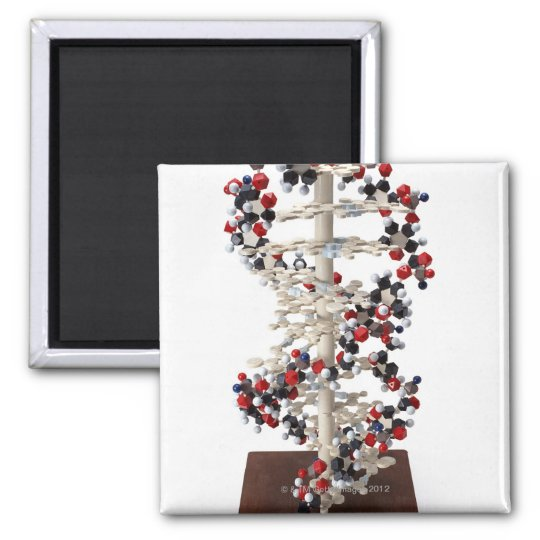DNA Model Magnet