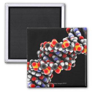 DNA molecule. Molecular model of DNA 2 Inch Square Magnet