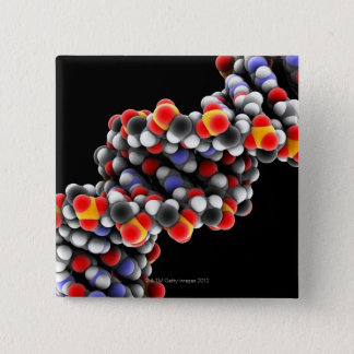 DNA molecule. Molecular model of DNA Button