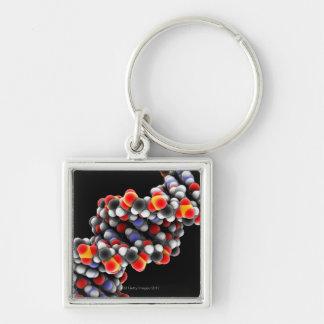 DNA molecule. Molecular model of DNA Keychain