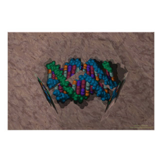 DNA Paperweight Poster