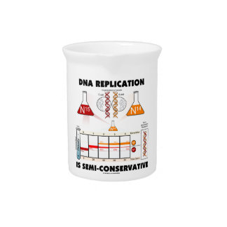 DNA Replication Is Semi-Conservative Beverage Pitchers