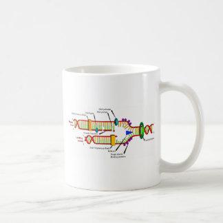DNA replication Mugs