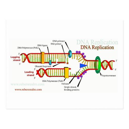 DNA Replication Postcard