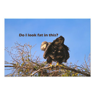 """""""Do I Look Fat In This"""" Eagle Art Photo"""