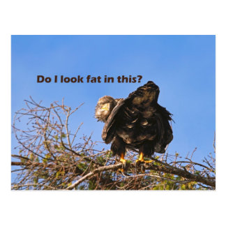 """""""Do I Look Fat In This"""" Eagle Postcard"""